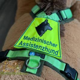 Med. Assistenzhund & Husky