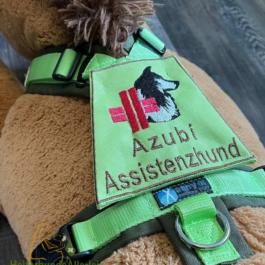 Azubi: Assistenzhund mit Collie